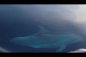 Davide delfin