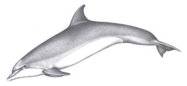 Bottlenose Dolphin Food Chain Picture And Images