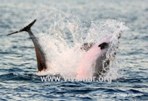 delfinski show na prostem CC drR