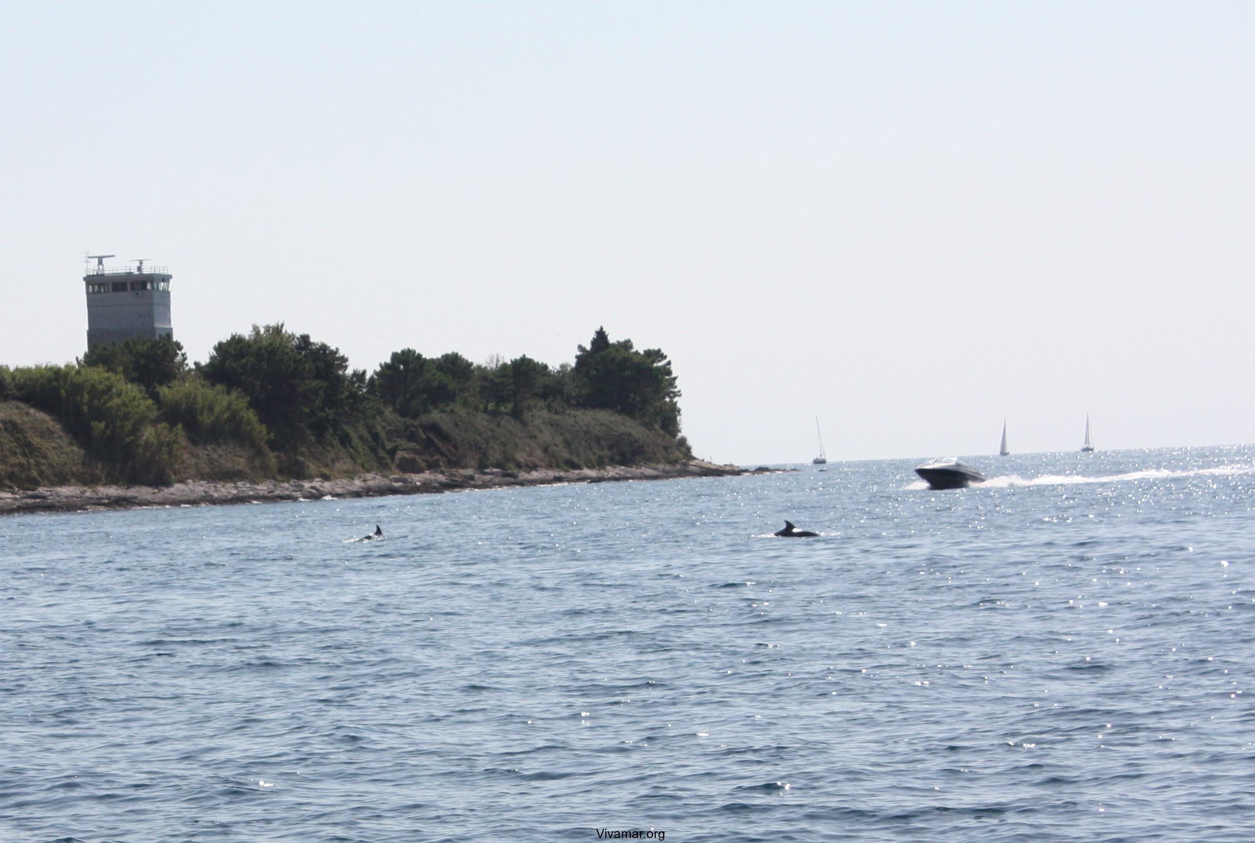 delfini piranski zaliv