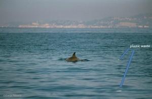 Waste & dolphins off PiranDR