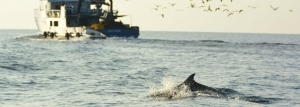 fisheries&dolphins r