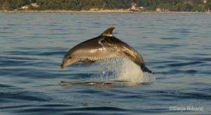 Darja Dolphin Istria12