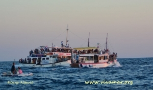 dolphin-watching-boats-jpg